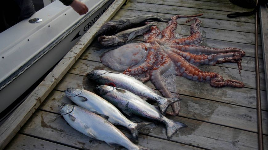 Vancouver Octopus Salmon Ling Cod